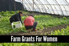 Acquiring Farm Grants For Women | These grants could be a great financial source to begin a farm or take a current farm to the next level.
