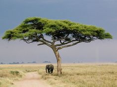 The Great East African Safari Experience - Condé Nast Traveler