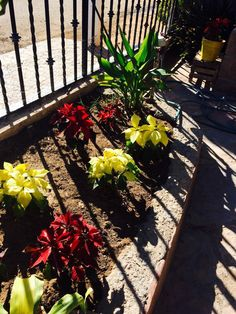 Jardín frontal navideño, Hermosillo, Son.