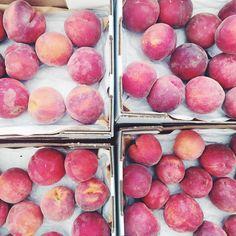 Peaches calling our name this morning @smfms #harvestfarms
