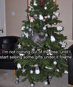 Funny Animal Pictures Of The Day – 26 Pics