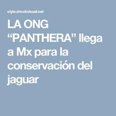 """LA ONG """"PANTHERA"""" llega a Mx para la conservación del jaguar"""
