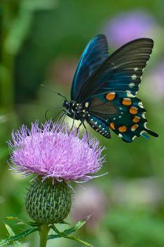 esben d Pregnancy i pregnancy test strip Beautiful Bugs, Beautiful Butterflies, Butterfly Wallpaper, Blue Butterfly, Girl Wallpaper, Butterfly Wings, Beautiful Creatures, Animals Beautiful, Flora Und Fauna