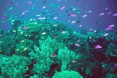 According to Ocean World, a coral reef can be home to as many different species and kinds of life as a rainforest -- which is part of why protecting them is so important. But these detailed and dramat Underwater Plants, Underwater Photos, Underwater Photography, Underwater Life, Georgia Habitats, Coral Reef Drawing, Under The Sea Animals, Chinese Boat, Sea Plants