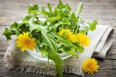 Pissenlit : semis, culture, récolte et utilisation en cuisine