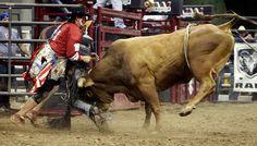 bullfighting rodeo - Google Search