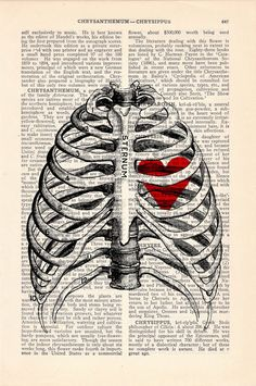 Rib cage anatomy physiology pinterest rib cage upcycled dictionary page print heart trapped in a rib cage anatomy art fandeluxe Image collections