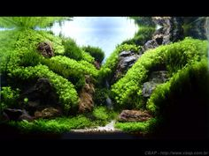 Great mountain/valley-type aquascape!