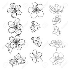 Set of cherry blossoms. Collection of flowers of sakura. Black and white drawing of spring flowers. Stock Vector - 103480361 flowers art Set of cherry blossoms. Collection of flowers of sakura. Flower Art Drawing, Flower Drawing Tutorials, Flower Sketches, Floral Drawing, Art Drawings Sketches, Drawings Of Flowers, Art Of Flowers, Flower Tutorial, Tattoos Of Flowers