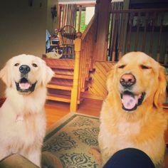 charlie & her friend aspen Aspen, Dogs, Animals, Animais, Animales, Animaux, Pet Dogs, Doggies, Animal