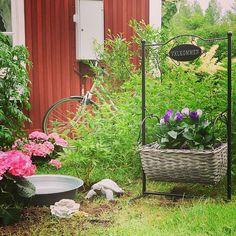 Vår trädgård skulle behöva en trädgårdsmästare. Vi saknar gröna fingrar.  Och lust.  #garden #flowers #shabbyhomes #vintagehome #gardening #trädgård #öb #ö&b