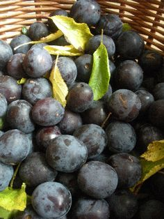 recipe for #damson vodka