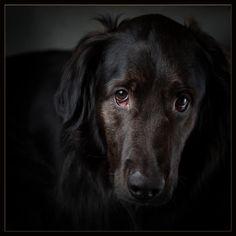 My dog Bear. Pet Photography, Jackson, Bear, Dogs, Animals, Animales, Animaux, Doggies, Animal