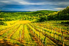 Mailberg Valley is a famous Austrian Viticultural Area located in Mailberg, Niederoesterreich, Austria. Records of commercial wine production in the region date back to the Middle Ages. Middle Ages, Austria, Vineyard, Explore, Landscapes, Commercial, Photography, Outdoor, Wine