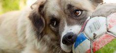 Японские ученые пришли к выводу, что собака-не только друг человека, она еще и психолог. И тому есть свои подтверждения, сделанные...