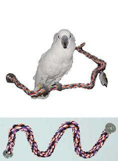 Perches 46291: Parrot Perch Pet Bird Perch Soft Rope Zigzag Flexable Perch Large 50 -> BUY IT NOW ONLY: $38.99 on eBay!