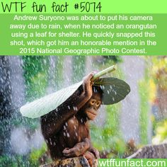 National Geographic top photos of 2015 - WTF fun facts | See more DIY projects/lifehacks here gwyl.io/