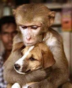 http://kikirikipics.com/wp-content/uploads/2011/09/Unusual-animal-friendships-30.jpg