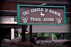 Disney's Fort Wilderness Resort & Campground offers guided tours on horseback, carriage, or wagon through the lush natural wilderness of Central Florida. This is a lovely way to spend some time with the family! (Photo credits: Tri Circle D Ranch, Fort Wilderness by Imagineer2802, via Flickr)