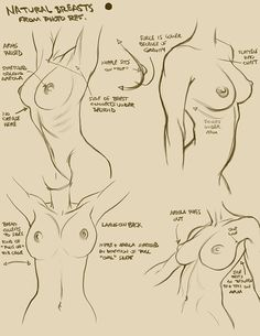 Breasts by TheUser ✤ || CHARACTER DESIGN REFERENCES | キャラクターデザイン • Find more at…