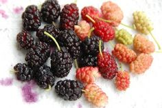 Mulberry season is upon us. Mulberries are delicious with many health benefits. Go eat some!