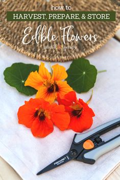 Edible Gardening Harvesting, Preparing, and Storing Edible Flowers - tips on the best ways for harvesting, preparing, and storing edible flowers for culinary use. Edible Plants, Edible Flowers, Edible Garden, Permaculture, Best Garden Tools, Garden Tool Storage, Home Vegetable Garden, Beautiful Flowers Garden, Hardy Plants