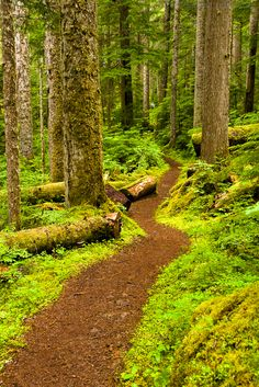 Thick Forests to Alpine Meadows. I think if I lived near this I would actually enjoy morning jogs