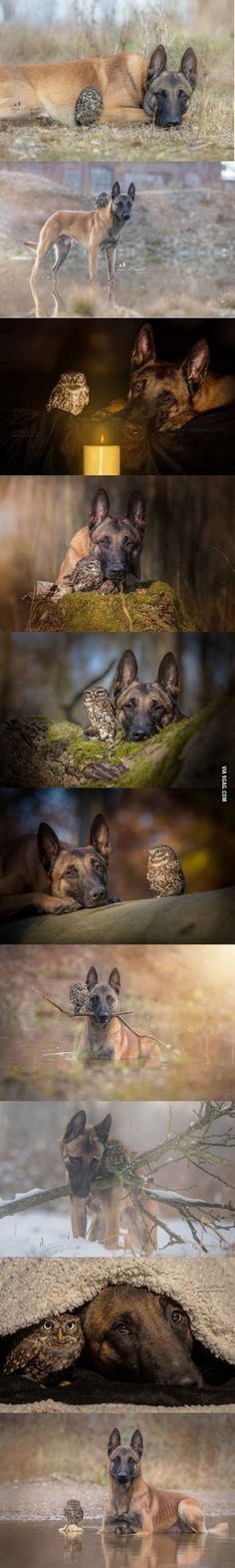 Friendship between a dog and an owl