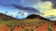 Wine Tasting Near Me, Rioja Spain, Rioja Wine, Wine News, Famous Wines, Wine Tourism, Spanish Wine, Wine Sale, Wine Guide