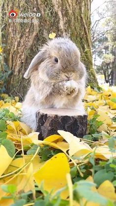 Cute Bunny Pictures, Baby Animals Pictures, Cute Animal Photos, Cute Animal Videos, Funny Animal Pictures, Animals And Pets, Baby Animals Super Cute, Cute Baby Bunnies, Cute Little Animals