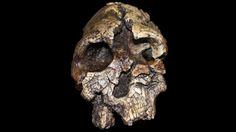 Kenyanthropus platyopus lived 3.5 million years ago (Credit: Sabena Jane Blackbird/Alamy)