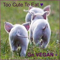 Too cute to eat, go vegan