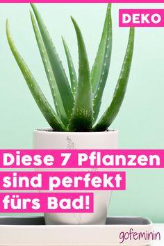 Die 22 besten Bilder auf Pflanzen im Badezimmer | Home decor, Indoor ...