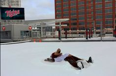 Mascots can make snow angels too.