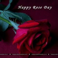 Rose Day - quotes about valentines - http://www.happyvalentinesday.co.in/rose-day-quotes-about-valentines/  #FreeGreetingsCards, #FreeLoveEcards, #FreeXmasCards, #HappyValentineDayPicsDownload, #HappyValentinesDayIdeas, #HappyValentinesDayMommy, #HappyValentinesDayWords, #NewYearCards, #OnlineGreetingCards, #SendFreeEcard