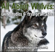 All About Wolves: Unit Studies and Free Printables - Homeschool Giveaways All About Wolves, Wolf Craft, Science Biology, Earth Science, History Timeline, Science Activities, Science Projects, Science Experiments, Nature Study