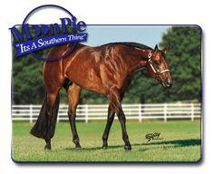 Its A Southern Thing - AQHA Stallion
