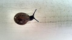 Let's slow down a bit, how about a snail's pace