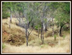 Taken near Charters Towers. Towers, Exterior Design, Countries, Architecture Design, Country Roads, Australia, Landscape, Places, Painting