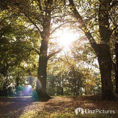 #herbst  #linz #fall #freinberg #igersaustria #igerslinz #autumn #travel #office #linzer #oö #upperaustria #wildlife #nature #sunny #citylife