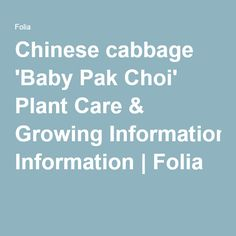 Chinese cabbage 'Baby Pak Choi' Plant Care & Growing Information | Folia