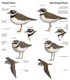 http://www.planetofbirds.com/wp-content/uploads/2013/05/20130503-212943.jpg