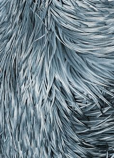 Sky blue feathers, posterss in the group Posters & Prints at Desenio AB (8584)