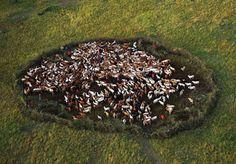 Atemberaubende Fotos zum Wochenende-Yann Arthus-Bertrand,