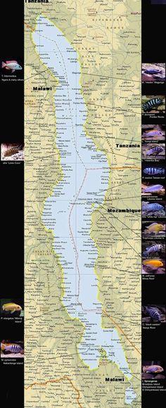 http://www.african-cichlid.com/Lake_Malawi_Map.htm