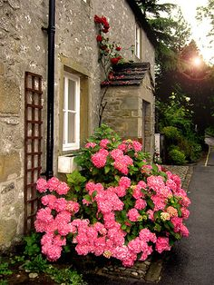 English Countryside flowers