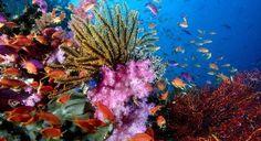 Ecosistema de un arrecife de coral
