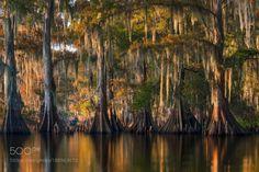 Southern Bayou by D-Breezy