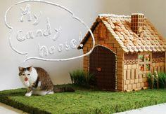 まこという名の不思議顔の猫   お菓子の家(まこサイズ)