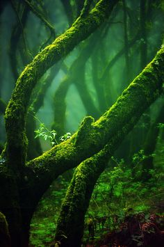 ~~Fairies Shelter ~ mossy forest by ~HomoColoris~~